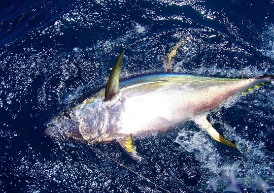 tuna2